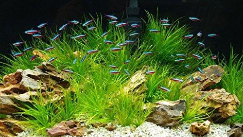 TM Aquatix Aquarium Sand Natural Fish Tank Gravel Plant Substrate (20kg, Light 2-3mm) 3