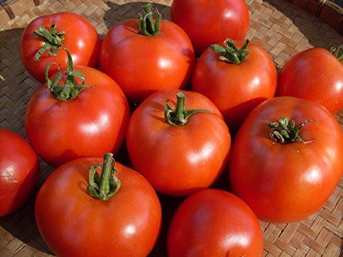 Live-harz (Liveseeds - Tomato