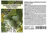 Seedeo Indianerbanane / Papau / Pawpaw (Asimina triloba) 3 Samen