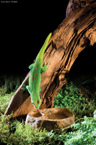 Exo Terra Gecko Dish 3