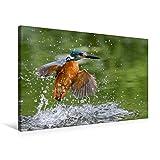 Premium Textil-Leinwand 75 cm x 50 cm quer, Aus dem Wasser auftauchender Eisvogel   Wandbild, Bild auf Keilrahmen, Fertigbild auf echter Leinwand, Leinwanddruck (CALVENDO Tiere)