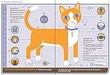 Katze - Betriebsanleitung: Intriebnahme, Wartung und Instandhaltung - Dr. David Brunner