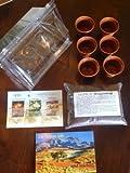 Mini-Gewächshaus - Die Wüste lebt..! - mit Samen vom Lebenden Granit, Moringa und Wüstenrose