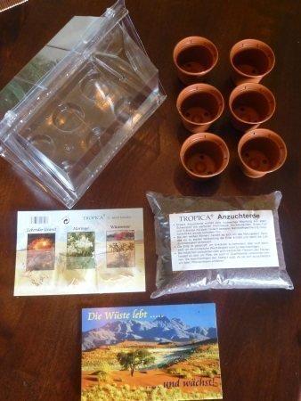 Mini-serre - le désert vit...! - avec des graines de moringa, rose du désert et granite vivant