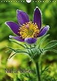 Naturbilder (Wandkalender 2018 DIN A4 hoch): Schönheiten der Natur ob Gräser oder Blüten spiegeln sich in diesem Kalender wieder (Planer, 14 Seiten ) ... [Kalender] [Apr 01, 2017] Tanja Riedel, by