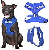 TRAINING (Dog In Training/Do Not Disturb) Blue Colour Coded Non-Pull Front and Back