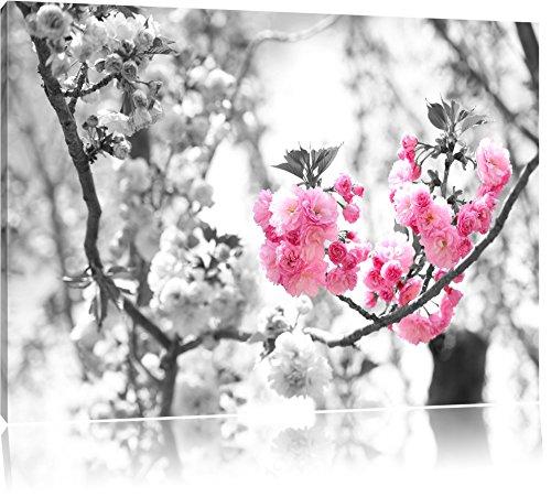 Pracht Gerahmt (sehr schöne Kirschblüten schwarz/weiß Format: 120x80 auf Leinwand, XXL riesige Bilder fertig gerahmt mit Keilrahmen, Kunstdruck auf Wandbild mit Rahmen, günstiger als Gemälde oder Ölbild, kein Poster oder Plakat)