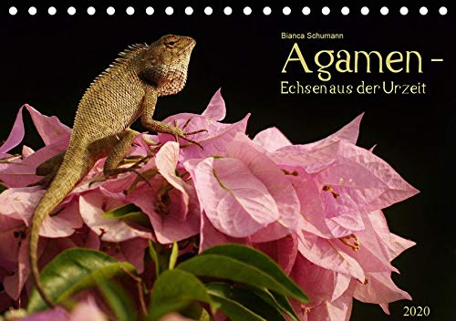 Agamen - Echsen aus der Urzeit (Tischkalender 2020 DIN A5 quer)