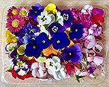 Fiori Commestibili BIOLOGICI - 120 FIORI EDULI di COLORI e VARIETÀ MISTE in vaschetta alimentare di 23 cm x 15 cm x 1,5 cm - Coltivati in Toscana dall'azienda agricola Carmazzi