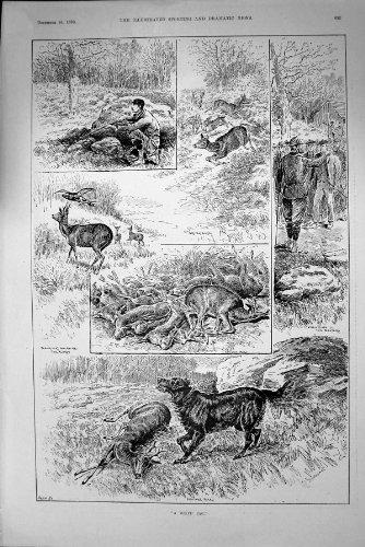Fucilazione Antica dei Battitori degli Uccelli di Blackcock di Sport di Caccia dei Cervi della Stampa 1893 - Caccia Dei Cervi Decor