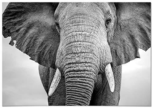 Panorama® Poster Elefante 70x50cm | Impreso Papel