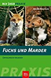 Fuchs und Marder: Erfolgreich bejagen