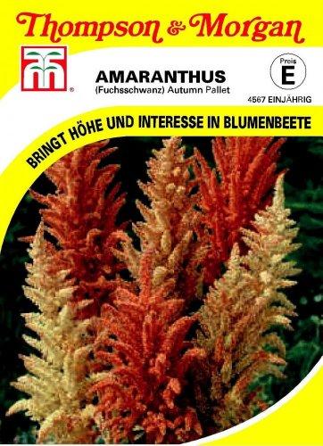 Fuchsschwanz (Amaranthus) Autumn Pallet von Thompson & Morgan [MHD 01/2018]