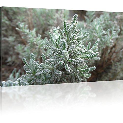 Bild auf Leinwand Wandbild Pflanze Natur Dekoration Grün Leinwandbild