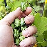 Soteer Garten- 10 Bio mini Wassermelone