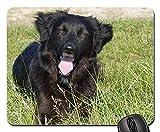 Gaming-Mauspads, Mauspad, Dog Crossing Natur Portrait schöne Tiere