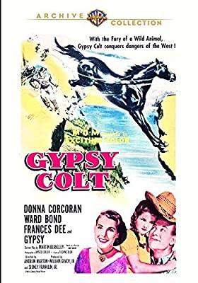 Gypsy Colt by Donna Corcoran