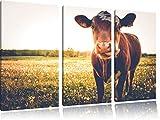 Einzelne Kuh auf Butterblumenwiese in der Abendsonne 3-Teiler Leinwandbild 120x80 Bild auf Leinwand, XXL riesige Bilder fertig gerahmt mit Keilrahmen, Kunstdruck auf Wandbild mit Rahmen, gänstiger als Gemälde oder Ölbild, kein Poster oder Plakat