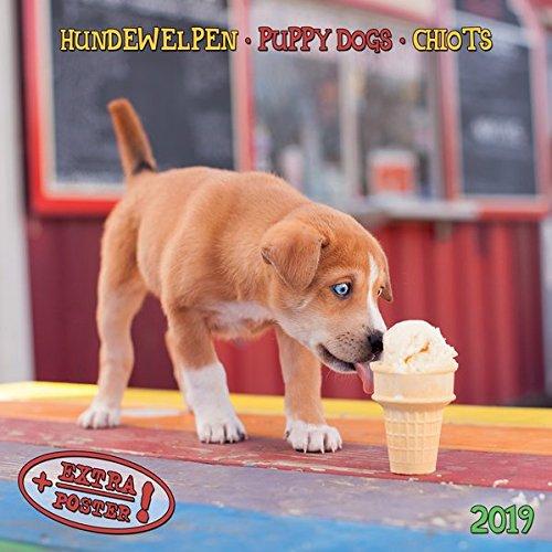 Hundewelpen - Puppy Dogs - Chiots 2019 Artwork
