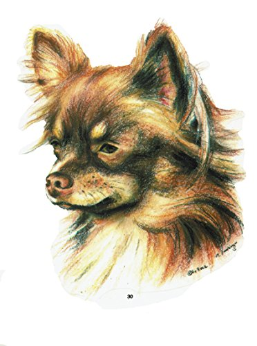 pet-lovers-gifts Aufkleber/Sticker/Autoaufkleber - Hunde Chihuahua [r030] -