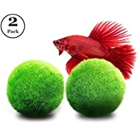 2Luffy Betta Ball: Live round-shaped Marimo Planta para peces Betta. Natural y Acuario Seguros.