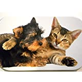 new slim 1oz hinged cute kitten cat and puppy dog tobacco baccy tin