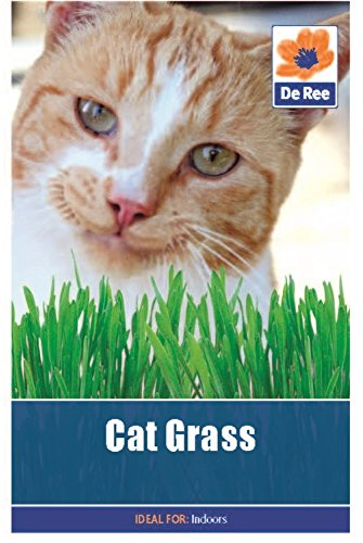 2 Packs of Cat Grass Seeds, Approx 55 seeds per pack, 110 in total