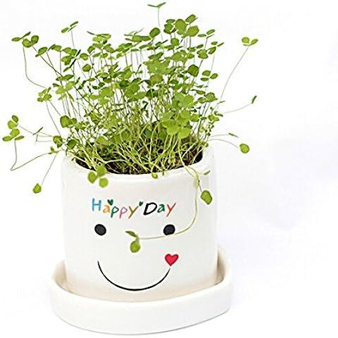Bluelover Hierba de Ángel suerte Mini DIY macetas amantes planta escritorio decoración -02