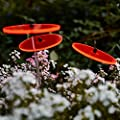 Cazador-del-sol ® Sonnenstrauß - rot von Cazador-del-sol bei Du und dein Garten