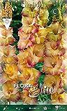 Bulbes Primaverili Gladioli à grandes fleurs, shooter, lot de 10 bulbes