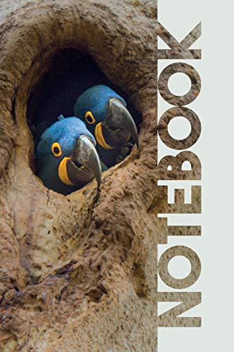 Notebook: Hyacinth Macaw Cool Composition Book for