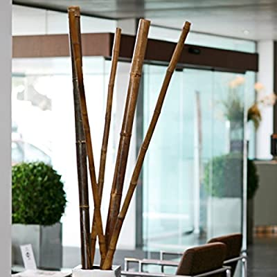 Bambusrohr Teak Durchmesser 60/70mm Länge 180cm von Noor auf Du und dein Garten