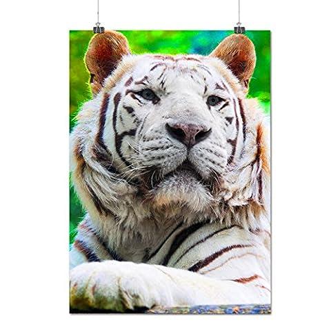 Siberian Tiger White Rare Cat Matte/Glossy Poster A3 (42cm x 30cm) | Wellcoda