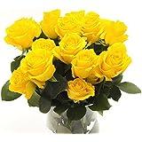INTER Flor -20 AMARILLA rosas en Confederación Aprox 30 hasta 40cm Recién de jardinero,MUY BUENA Adecuado como Regalo Para Día San Valentín o Día la madre,Elegante Flores cortadas,símbolo amor,Freude