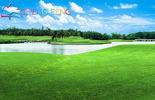Turfgrass Semences à gazon (Golf Terrains de soccer Villa) Seeds catégorie spéciale Evergreen Lawn 1000 Seeds