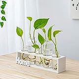 SQbjshaop Sencillo, jarrón de Vidrio Fresco, Planta hidropónica, Inserciones de Flores Transparentes, decoración de la Sala de Estar, Blanco 5 Orificios