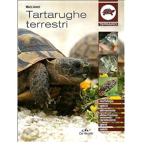 Tartarughe terrestri - Tartaruga Di Terra