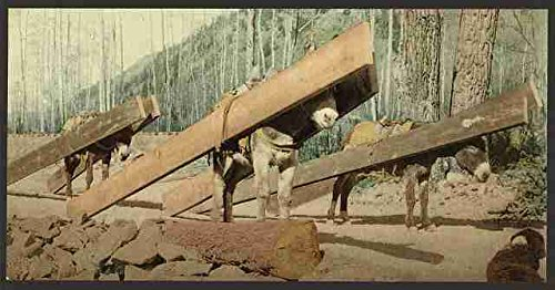 Lumber Pack (Colorado A lumber pack A3 Box Canvas Print)