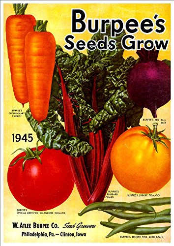 watlee-burpee-co-seeds-grow-1945-a4-glossy-art-print-taken-from-a-beautifully-illustrated-vintage-se