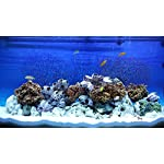 TM Aquatix Aquarium Sand White Fish Tank Gravel Natural Substrate (5kg, White 1-1,5mm) 8