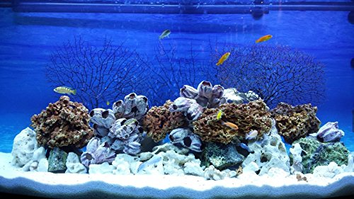 TM Aquatix Aquarium Sand White Fish Tank Gravel Natural Substrate (5kg, White 1-1,5mm) 4