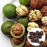 Portal Cool Seeds Package: Pack / 10Pcs: 10Pcs Garden Outdoor s Nueces saludables Nueces de nogal Kecp 01
