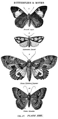 stampers-anonymous-tim-holtz-montada-sello-de-goma-rojo-25-pulgadas-x-5-inch-butterflies-y-polillas-