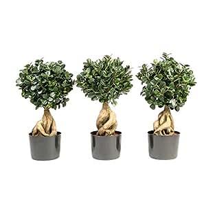 Pianta artificiale Ficus Panda microcarpa bonsai, altezza 50cm - 646 foglie