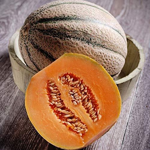 HONIC 125 Samen Melone Charentais Cantaloupe/Variety Traditionelle Französisch