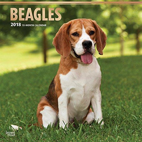 Beagles 2018 - 18-Monatskalender mit freier DogDays-App: Original BrownTrout-Kalender [Mehrsprachig] [Kalender] (Wall-Kalender) (Beagle-kalender)