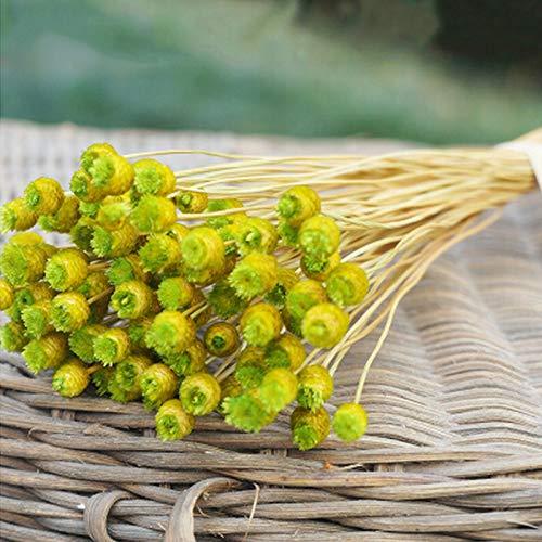 Momokoi fiori essiccati, 50 steli di fiori secchi per composizioni bundle home decor foto puntelli fatti a mano asciugare all'aria verde