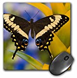 Danita Delimont - Butterflies - Tropical Butterfly, Emperor Swallowtail from Africa - US48 DGU0449 - Darrell Gulin - MousePad (mp_95477_1)