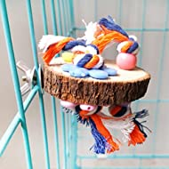 Greenlans Round Wood Perch Stand Platform Toy for Pet Parrot Bird Budgie Parakeet Cockatiel Lovebird Finch Toy Bite Chew Cage Hangings Decor