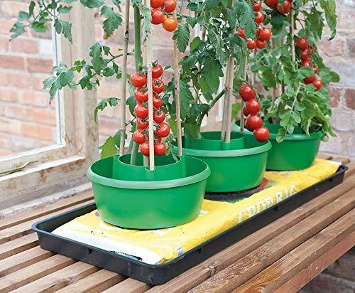 Garland Grüne Pflanzen-Halos Bewässerungs-Topf Unterstützung für Pflanzen und Tomaten